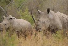 animal poaching in Africa