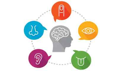 illustration depicts the sensory receptors